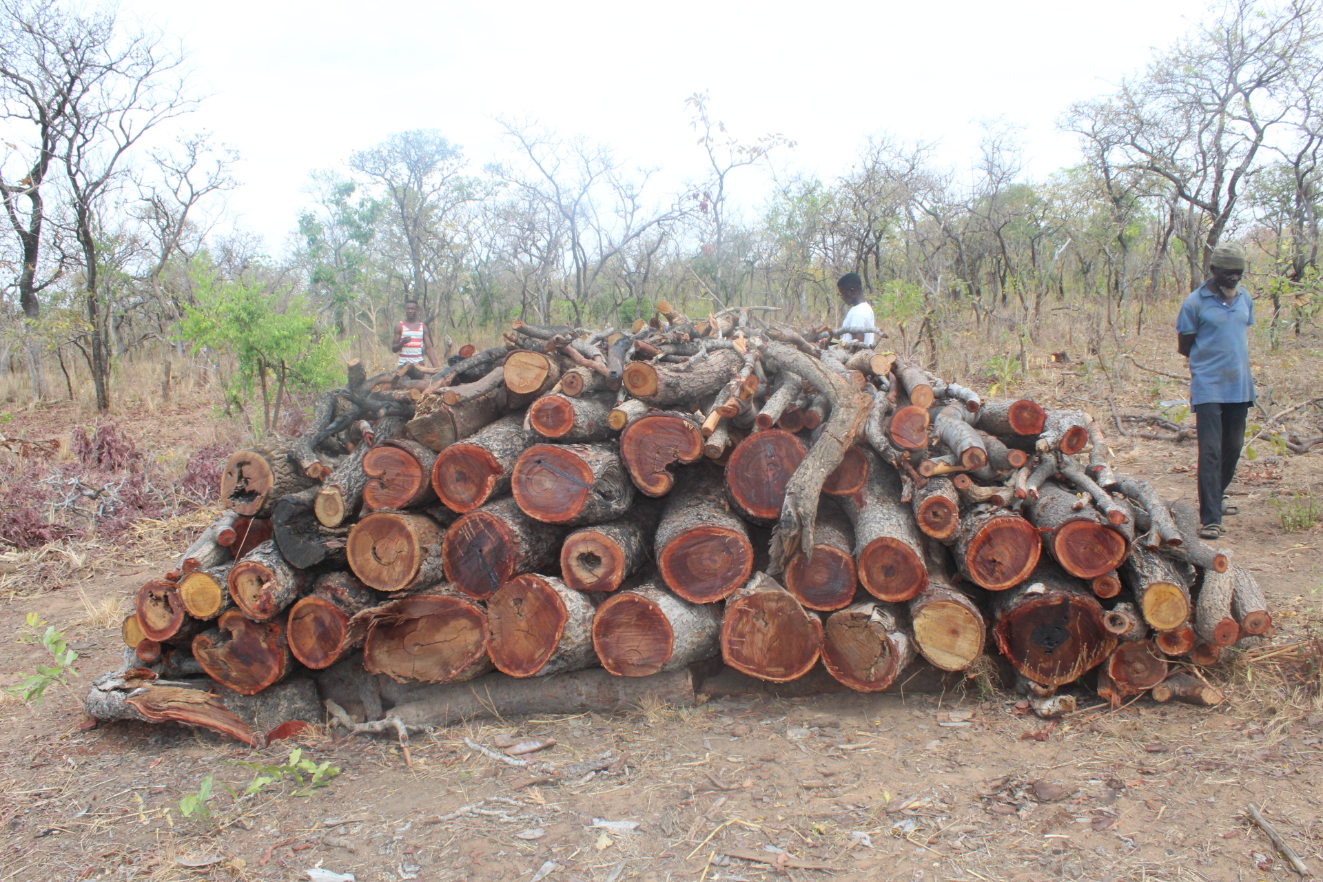 Mapping Charcoal Production Sites